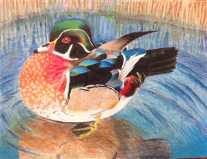 duck stamp Deborah B.