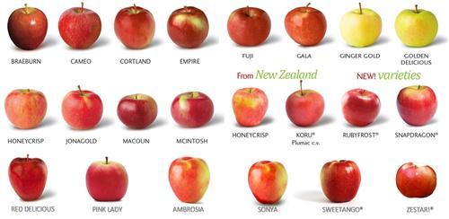 Rudnicki Deena Pre K Apples