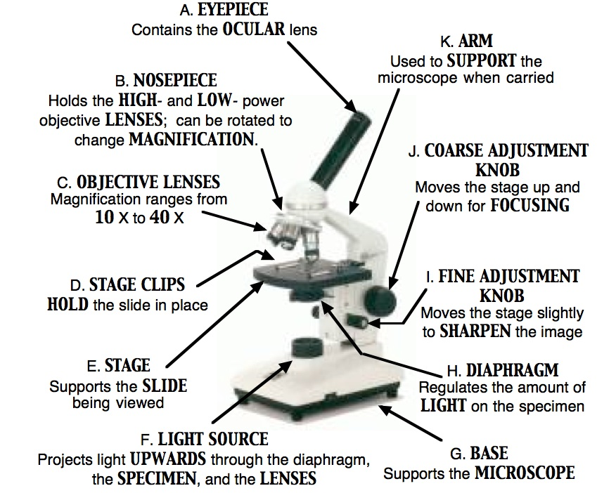 Free microscope parts worksheet - Google Docs